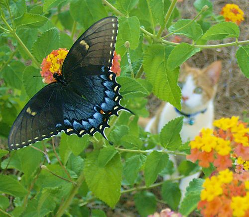 Kitty_and_butterfly